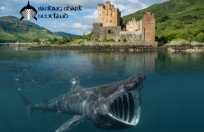 Basking Shark Expedition